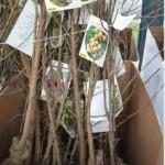 liquidación árboles frutales